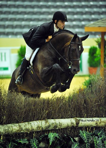 110 best images about Show Jumping on Pinterest | Show ...