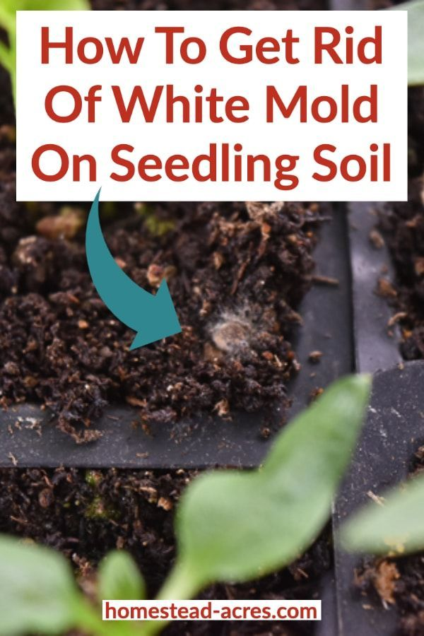 How To Get Rid Of White Mold On Seed Starting Soil Seed Starting Soil Seedlings Indoors Starting Seedlings Indoors
