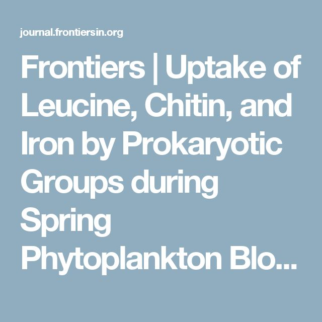 Frontiers | Uptake of Leucine, Chitin, and Iron by Prokaryotic Groups during Spring Phytoplankton Blooms Induced by Natural Iron Fertilization off Kerguelen Island (Southern Ocean) | Aquatic Microbiology