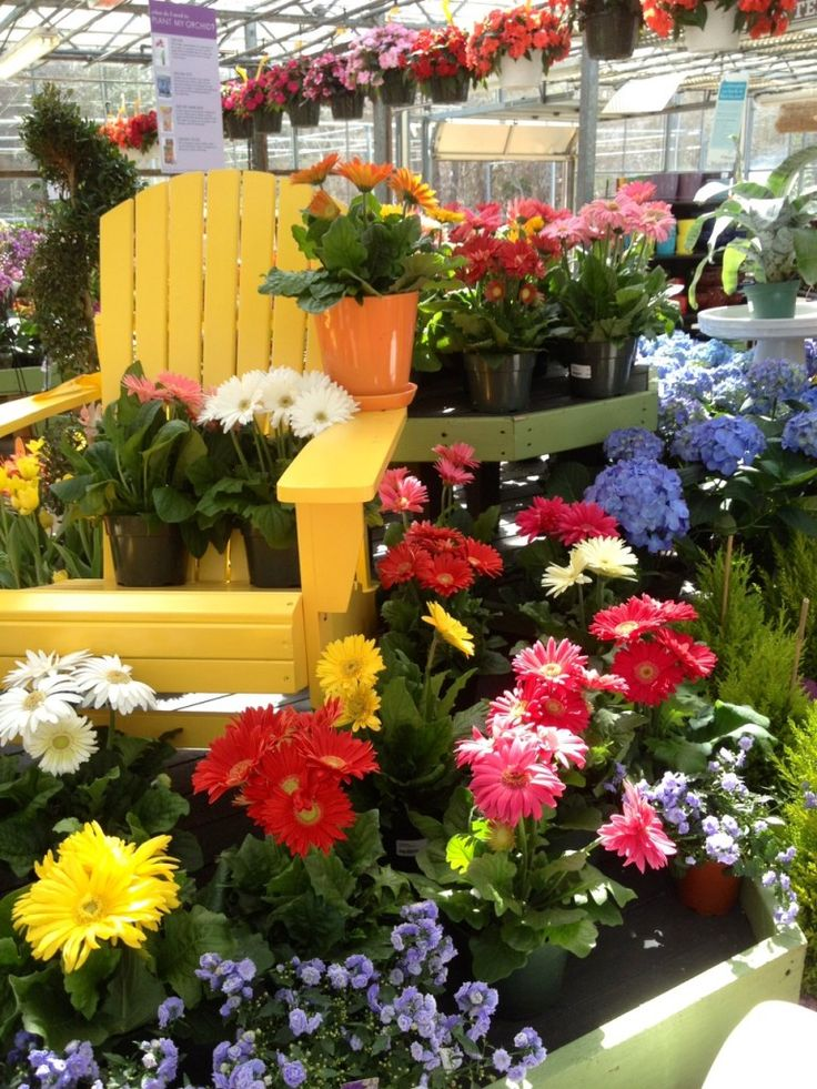 Pic I took at Mahoney's Garden Center_Great display.