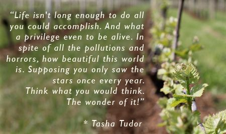 """Life isn't long enough to do all you could accomplish. And what a privilege even to be alive. In spite of all the pollutions and horrors, how beautiful this world is. Supposing you only saw the stars once every year. Think what you would think. The wonder of it!""""--Tasha Tudor"""
