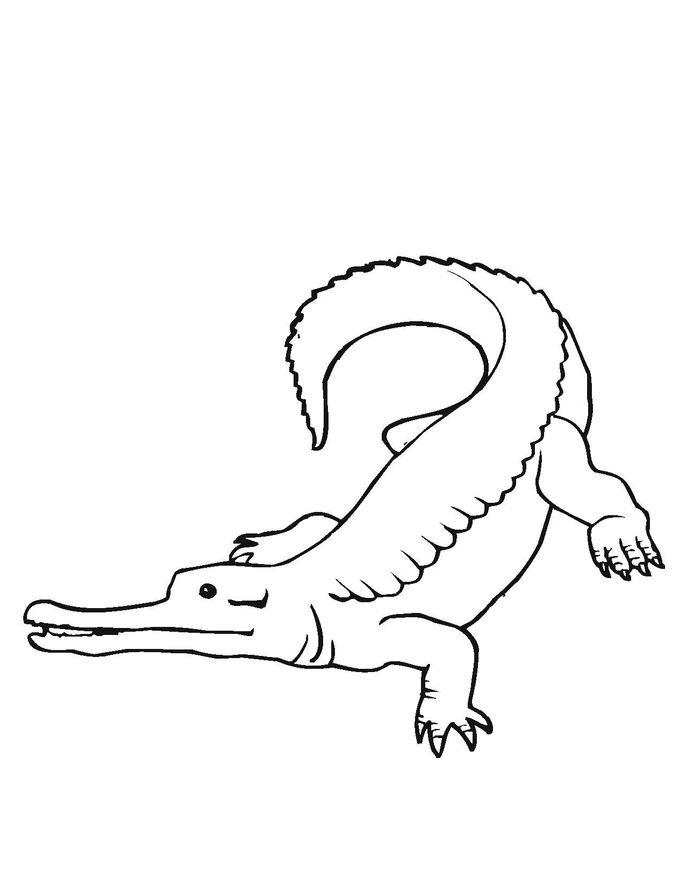 Reptiles Crocodile