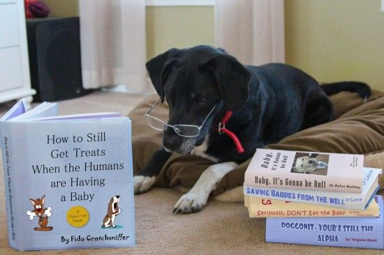 How To Still Get Treats When The Humans Are Having A Baby Loldogs Pinterest The