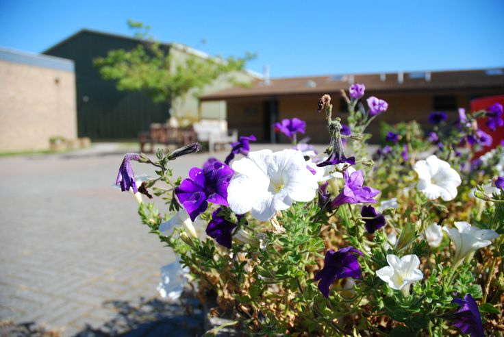 This one was taken in the quard playground of my High School. I like the difference in the white and purple flowers.