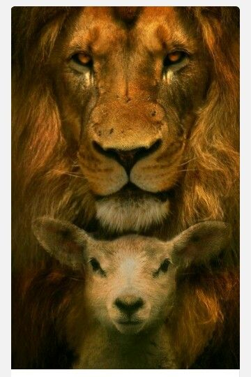 The lion and the lamb explained. ... http://www.whatdoesthebibleteach.com/lionAndLamb.tiles