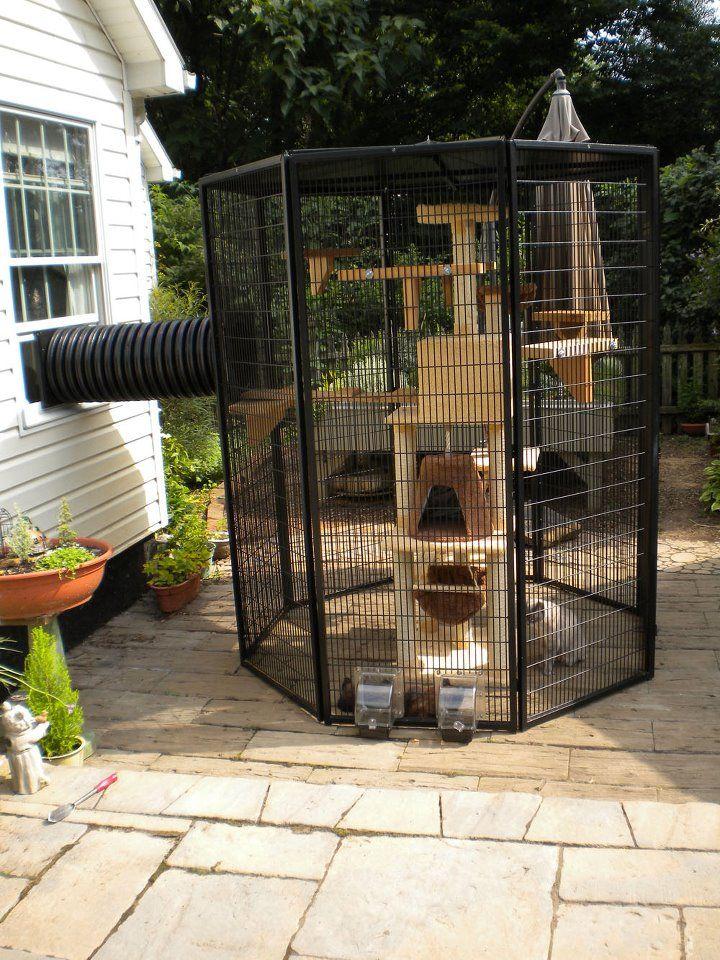 40 best outdoor cat enclosure images on pinterest for Having an indoor cat
