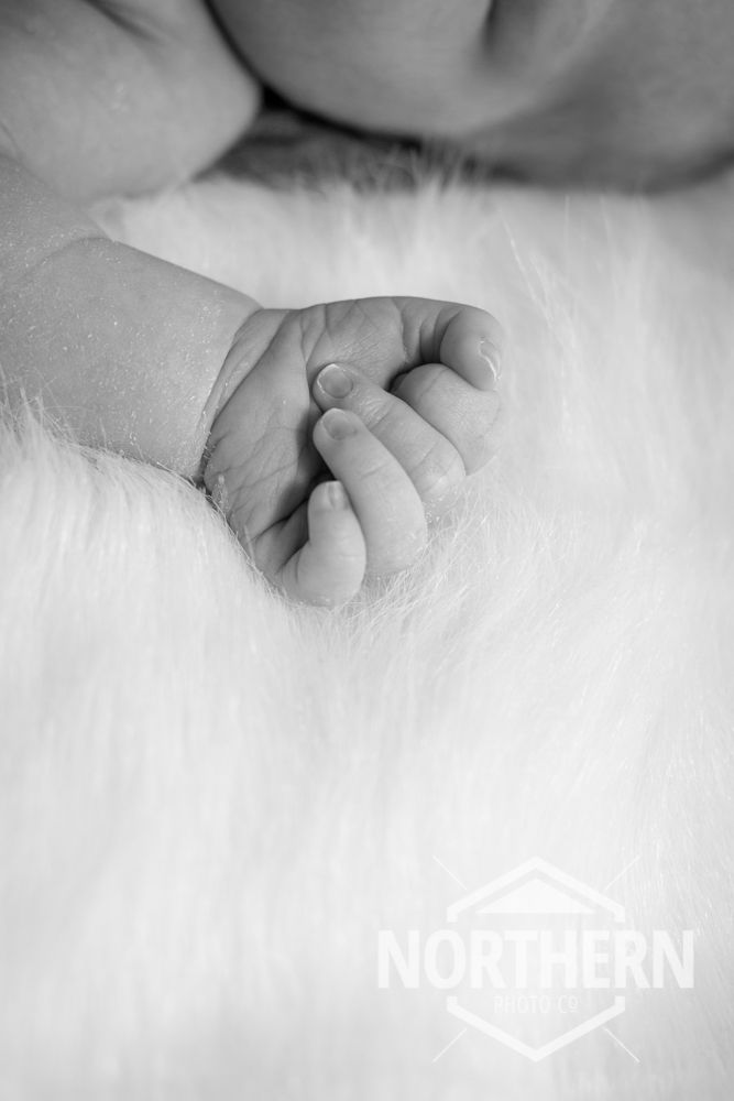 Black and white newborn photo - baby hands  www.northernphotographyco.com
