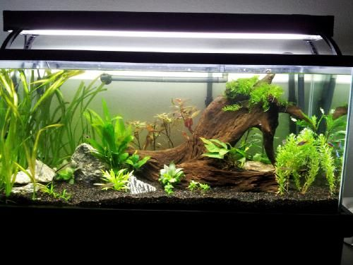 40 gallon breeder tank - like the aquascaping!