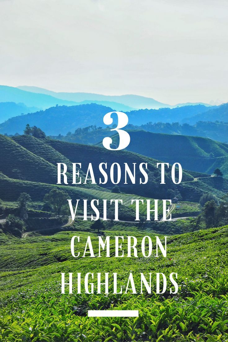 Three Reasons To Visit The Cameron Highlands, Malaysia.