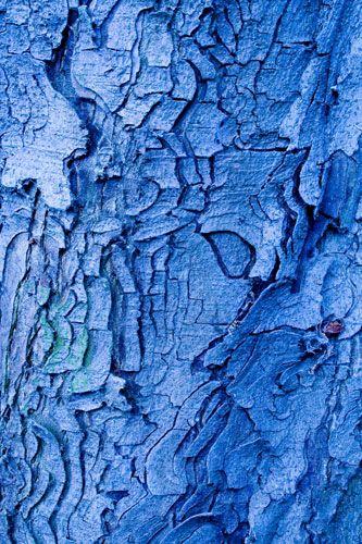 Blue Art | Nobody art, the art of nature (natural art) : the trunk woman