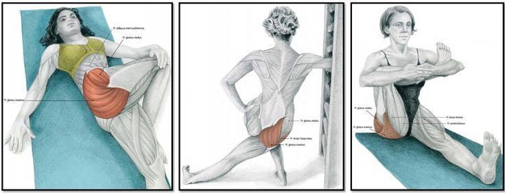 Мышечная группа ноги: приводящие мышцы (отведение бедра сидя/на коленках, с упором на колени).