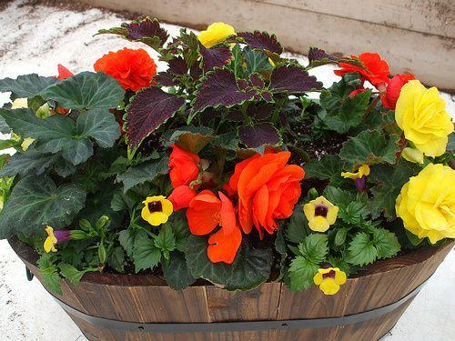 Best 25 Plants Around Pool Ideas On Pinterest Pool Plants Planters Around Pool And Patio