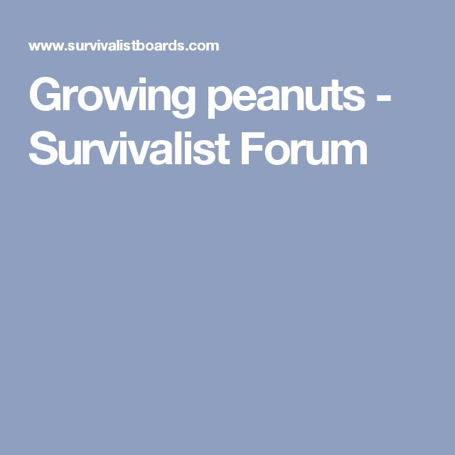 Growing peanuts - Survivalist Forum