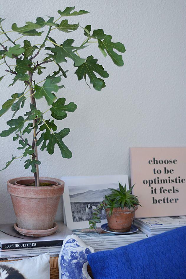 Mit figentræ