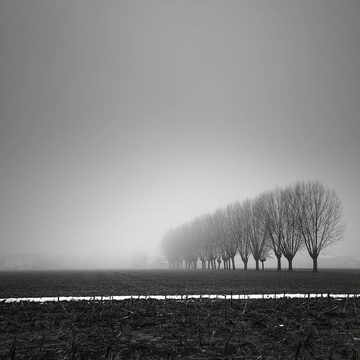 Long Exposure Tree Photography by Pierre Pellegrini   DeMilked
