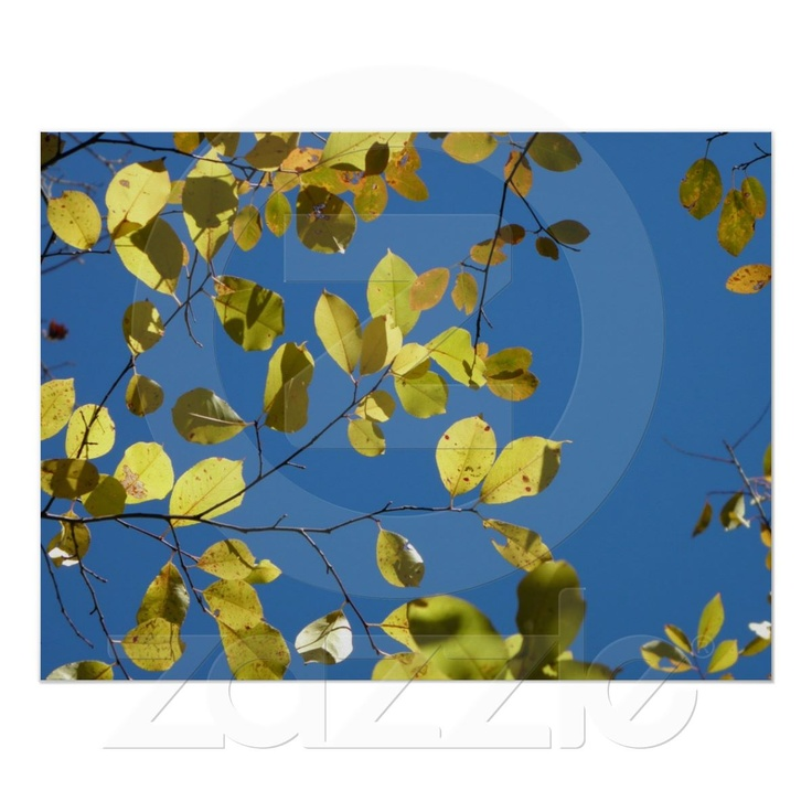 Yellow Birch Leaves Poster from Zazzle.com