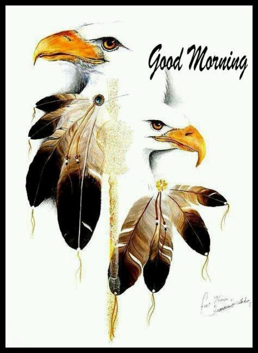 Good Morning America Eagles : Best good night morning evening