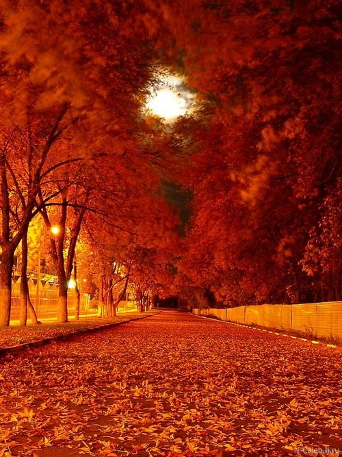 Fall color is the heart warming color