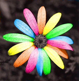 #LGBT #Love: Colour, Rainbows Colors, Art Photography, Beautiful, Image, Things, Colors Flowers, Rainbows Daisies, Rainbows Flowers