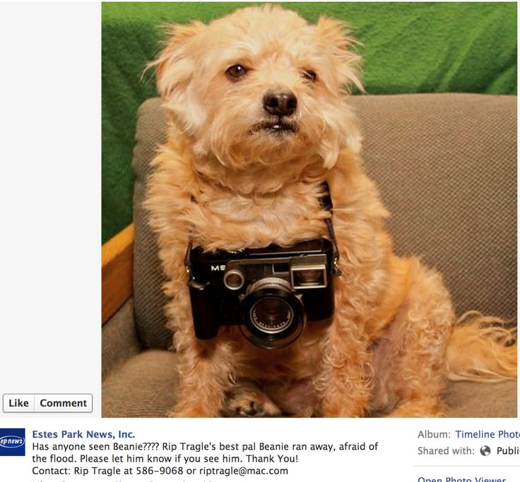 14 best images about Colorado Flood Lost Dogs on Pinterest ...