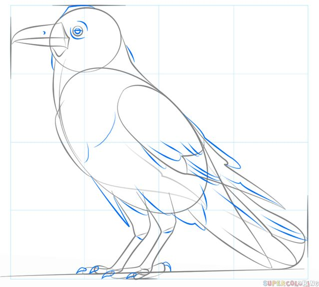 how to draw a raven for beginners