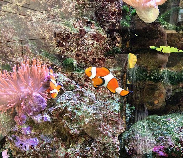 Ich hab Nemo gefunden ....endlich. 😁  #nemo#findetnemo#fish#clownfish#colorful#universitätsklinikum#köln#nrw#zweitwohnsitz