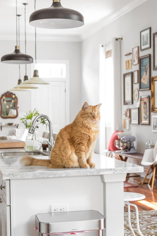 Simple Ways To Keep Cats Off Your Kitchen Counters Keeping Cats
