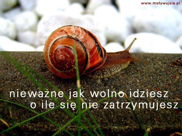 Motywacja - idź do przodu! | MOTYWUJSIE.PL