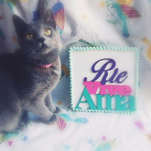 Cuadrito rie vive ama! #ohmycat