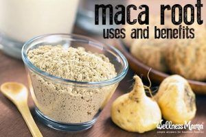 Maca Root Uses and Benefits Maca Herb Profile