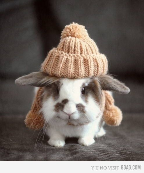 animals in clothes are so much cuter