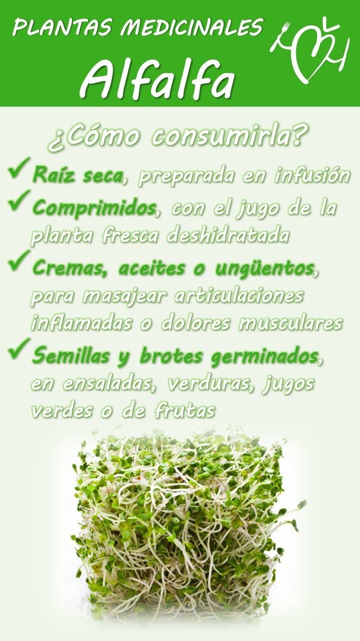 Planta medicinal y sus beneficios plantas medicinales t for Planta decorativa propiedades medicinales