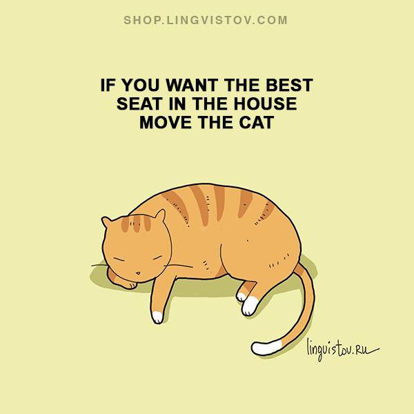 How true. Cats always know the best places to rest. Shop.lingvistov.com
