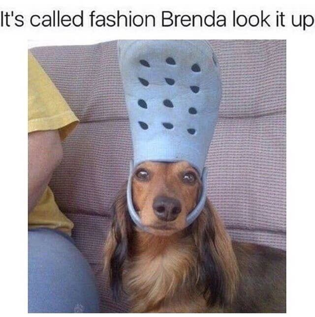 Just 33 Hilarious Dog Memes Funny Dog Memes Funny Animal Jokes Cute Funny Dogs