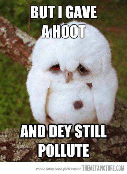 Sad Baby Owl…