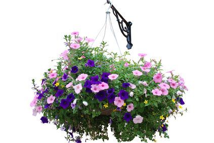 How to Grow Hanging Baskets from Seeds | Garden Guides