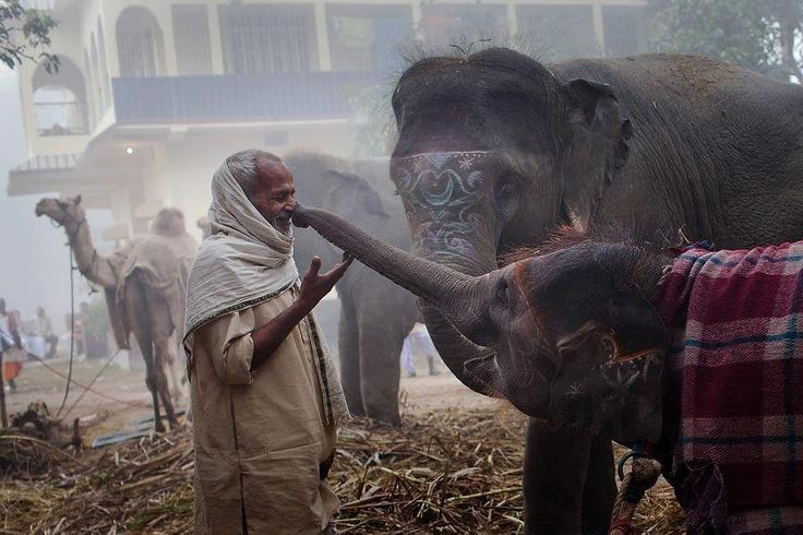 Hindú y elefantes.