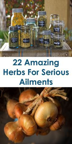 22 Amazing Herbs For Serious But Common Ailments: This Article Discusses Ideas On The Following; Super Herbs And Spices, Garden Herbs, Super Herbal Pills, Super Herbs For Weight Loss, Super Herbs For The Brain, Super Herbs For Health, Best Super Herbs, Medicinal Herbs, Etc.