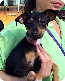 Dog For Adoption In West Palm Beach