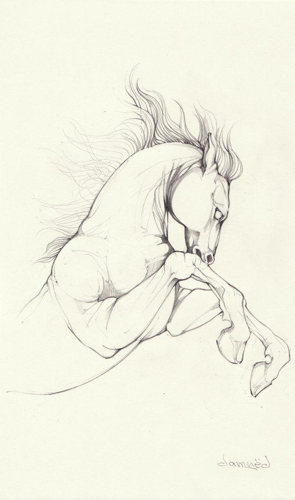 horse sketch by dreamsCrEaToR on deviantART
