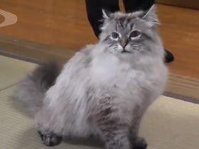 プーチン氏寄贈ネコ ミールさん