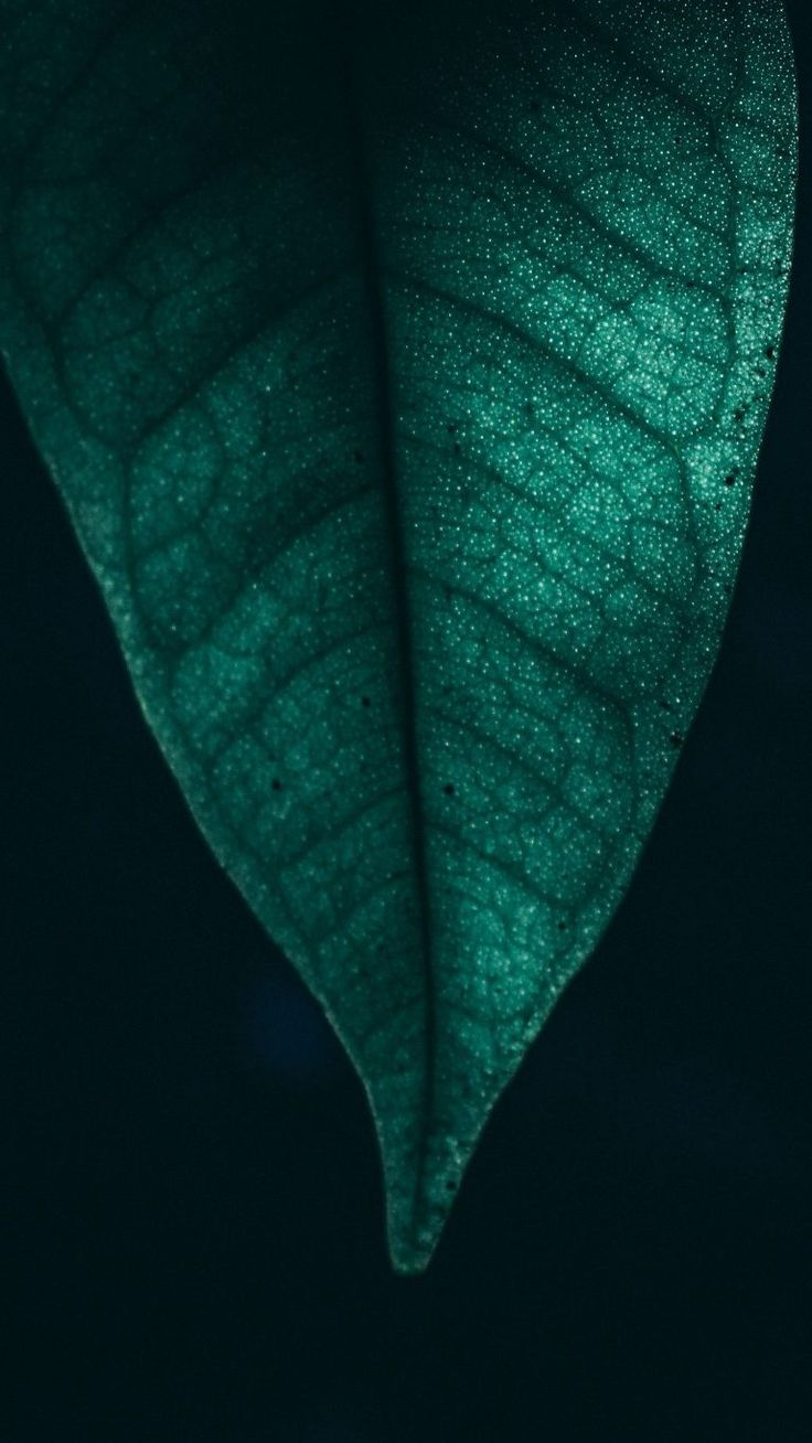 Whatsapp Wallpaper 068 4k Background Leaves Wallpaper Iphone Android Wallpaper