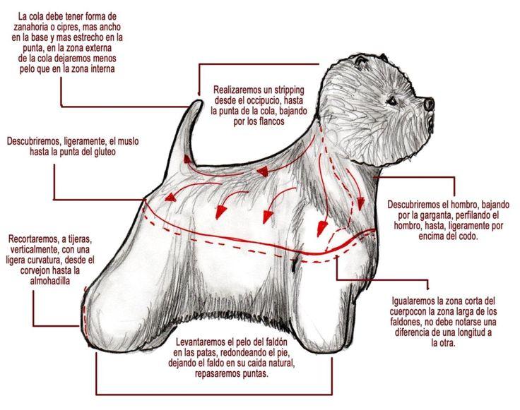 Arreglo comercial de west highland terrier. Dibujo de Miguel Lluch.