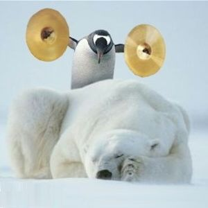 Funny Animals: Funny Penguins Photos