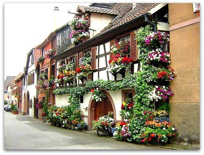 Oltre 1000 idee su Piante Da Balcone su Pinterest Piante per cortile ...