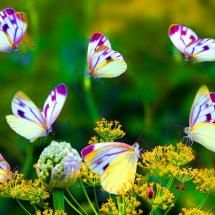 Colorful.Beautiful Butterflies, Fun Recipe, Nature, Colors, Wonder World, Flower Gardens, Insects, Moth, Purple Flower