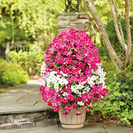 Spring has sprung and colourful annuals are everywhere. Here's how to create a beautiful colourful petunia flower cascade for your garden. http://www.home-dzine.co.za/garden/garden-annual-flower-tower.htm