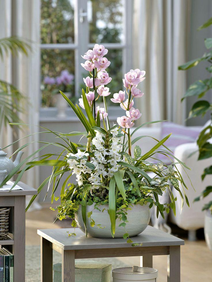 les 100 meilleures images du tableau orchid es sur. Black Bedroom Furniture Sets. Home Design Ideas