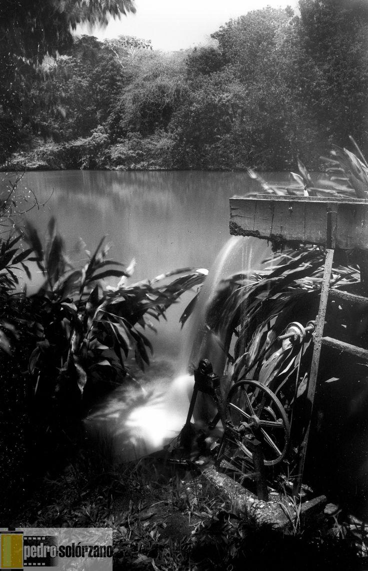 Eco-parque las garzas, Cali, Colombia. Nikon F100. efke 25.