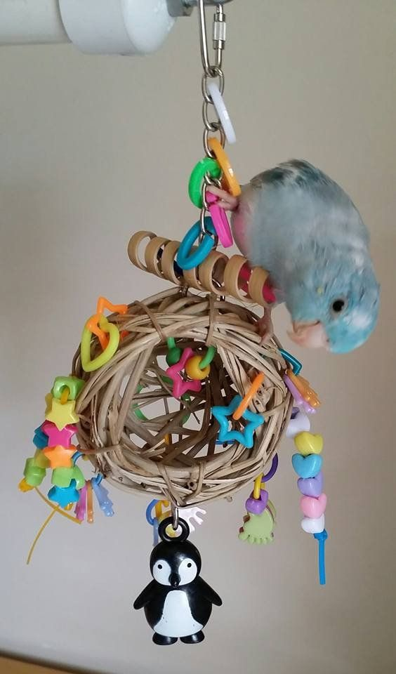 how to make bird toys for parakeets